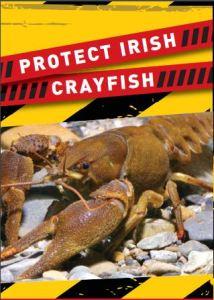 Irish Crayfish Conservation