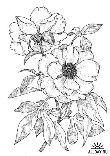 Трафареты цветов для рисования | БАТИК и Я