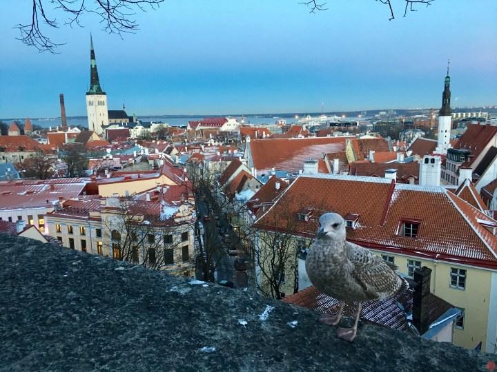 愛沙尼亞塔林自由行攻略 |交通/票券/住宿/行程/景點出走日記
