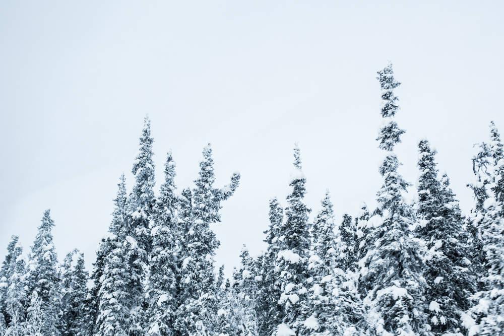 Alaska-16