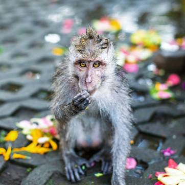 Bali-IG-irenesarah12