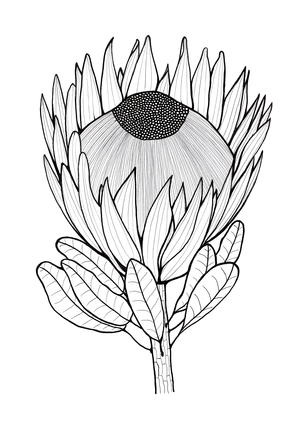 Glorious Protea Flowers To Color Allfreeholidaycrafts Com