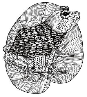 Intricate Zentangle Frog Adult Coloring Page Favecrafts Com