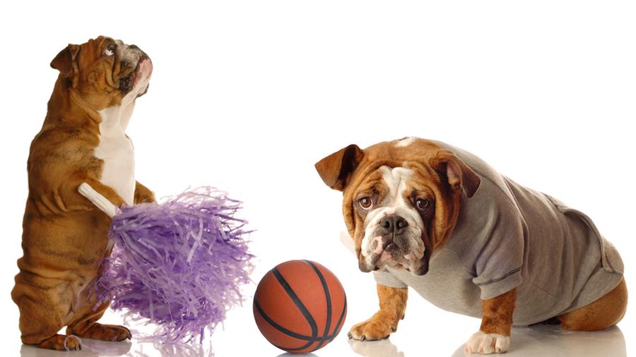 dogs with basketball and pom pom