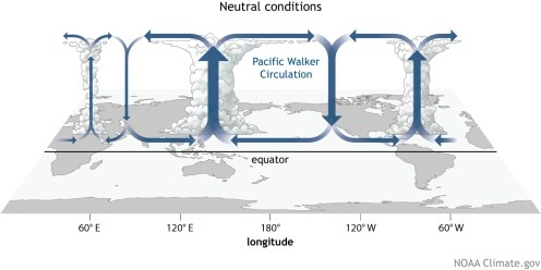 Generalized Walker Circulation (December-February) during ENSO-neutral conditions. Convection associated with rising branches of the Walker Circulation is found over Indonesia and the rest of the maritime continent, northern South America, and eastern Africa. NOAA Climate.gov drawing by Fiona Martin.