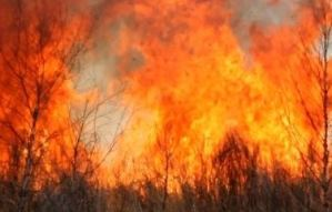 Bush fires on the rise in St Ann
