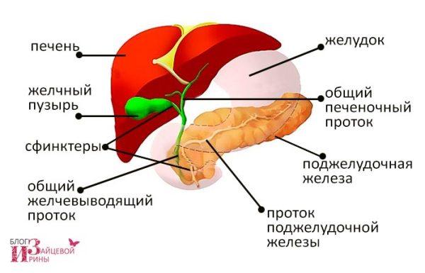 Диета №5, питание после удаления желчного пузыря. Рецепты ...