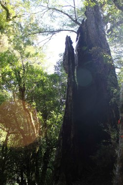 Lake Waikaremoana (137)_1