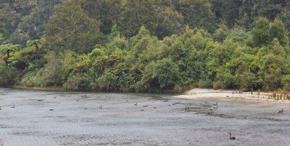 Lake Waikaremoana (328)_1_1