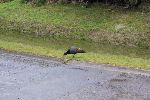 Lake Waikaremoana (41)_1