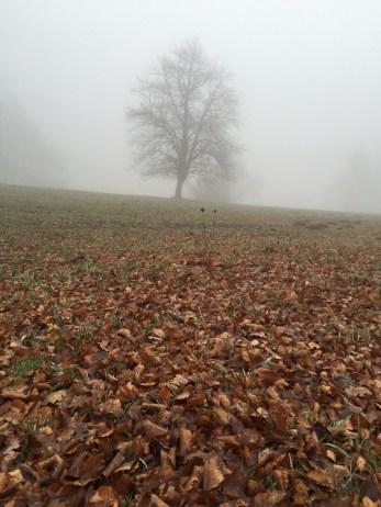 Baum und Laub im Nebel