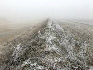 frozen field iris gassenbauer