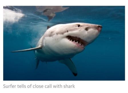 Busselton Shark Attack Surfer Story