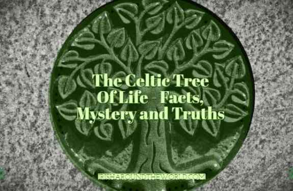 The celtic tree of life facts (1)