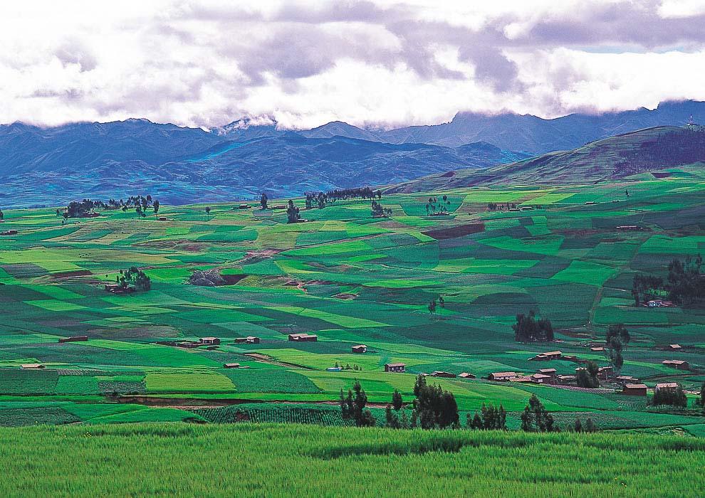 Green potato fields