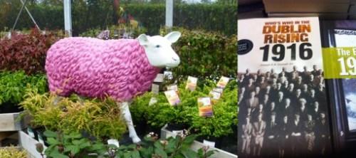 mouton-rose-1