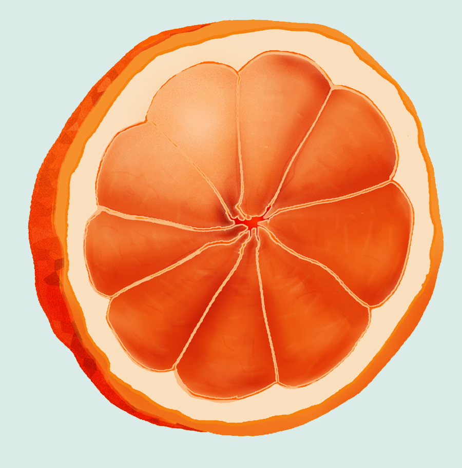 ARTWORK: Illustration – Fruit