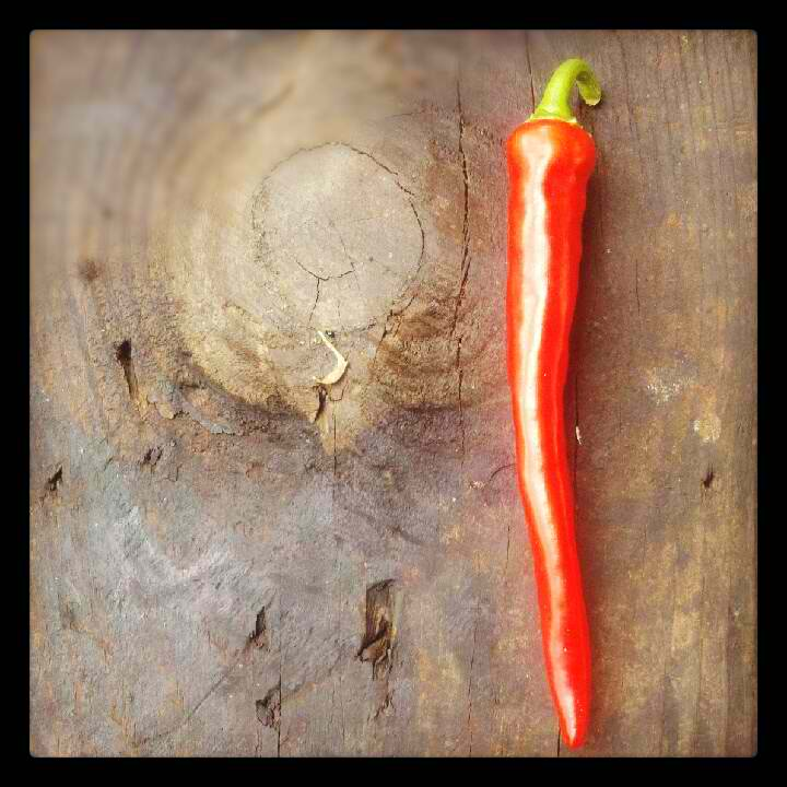 PHOTOGRAPHY: Red Pepper