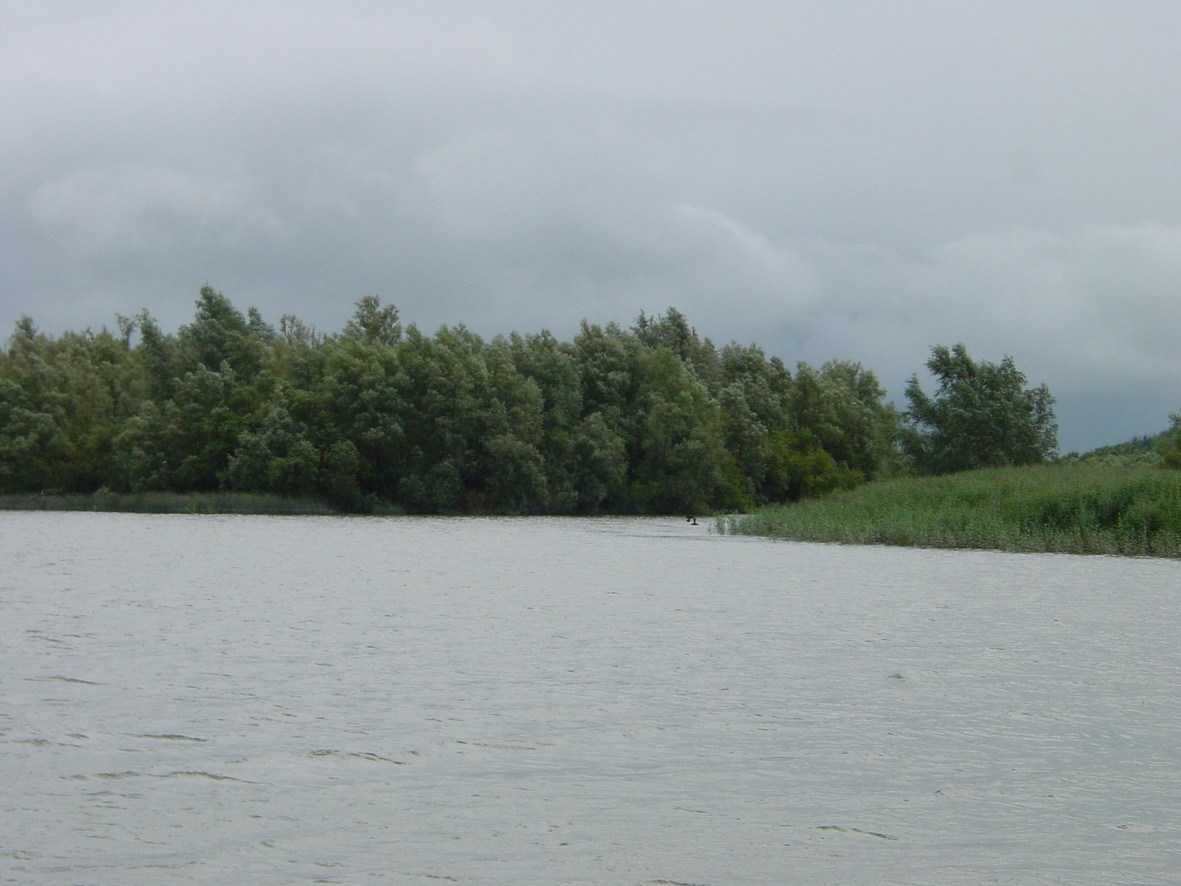 The upstream end of Fiddown Island. The R/H channel is not navigable
