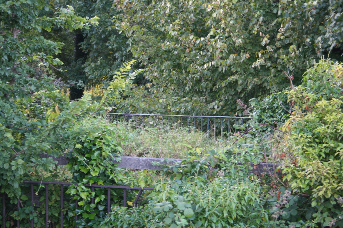 The railings of the old bridge can be seen through the foliage