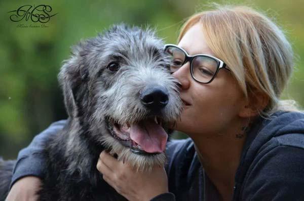 Araberara Quid, Irish Wolfhound