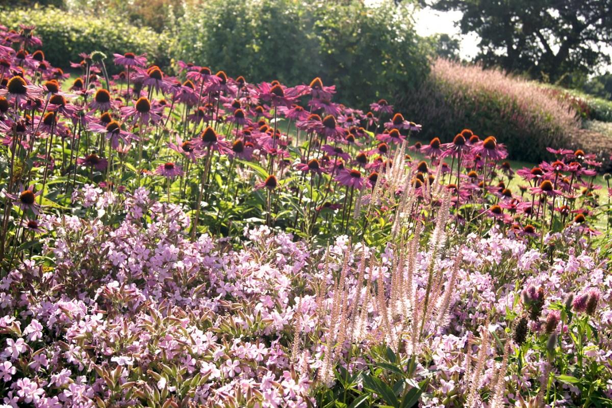 Blühende Pflanzen im Spätsommer