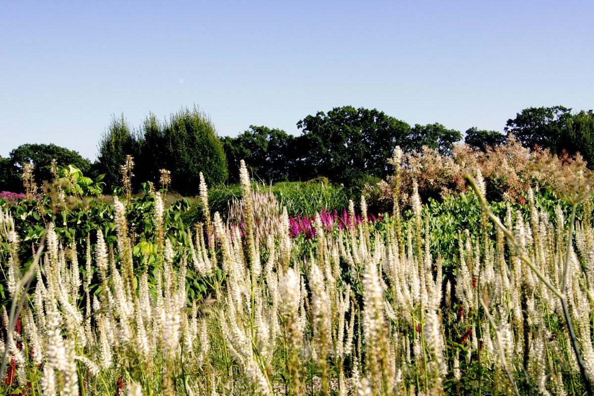 Lieblingspflanzen aus dem Sussex Prärie Garten