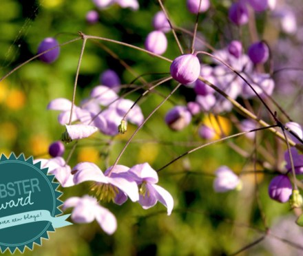 Thalictrum delavayi 'Splendid' (Liebster Award)