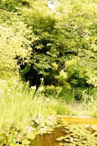 Jardin botanique de St-triphon