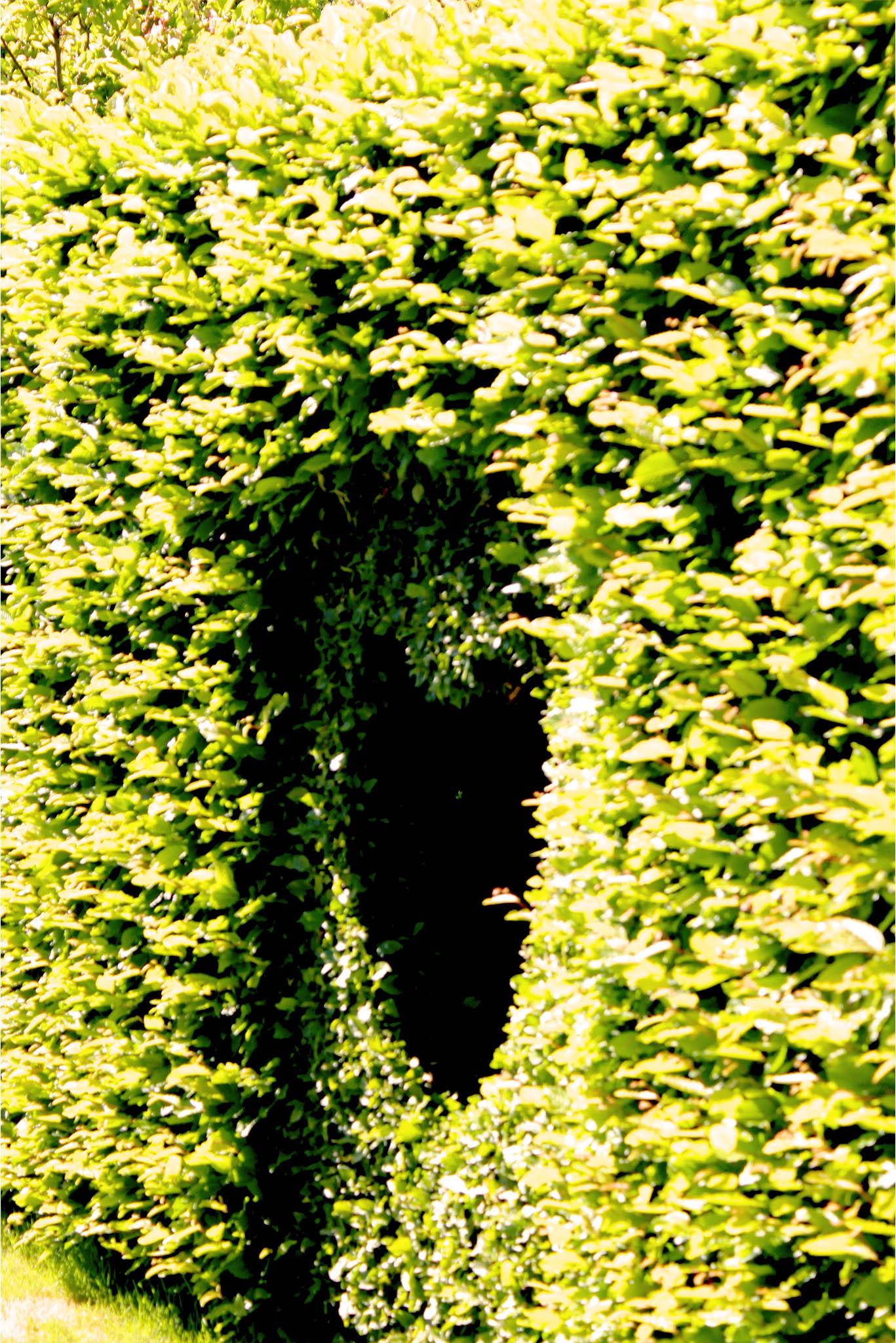 5 Tipps Aus Dem Buch Der Gestaltete Naturgarten Irislandschaftench