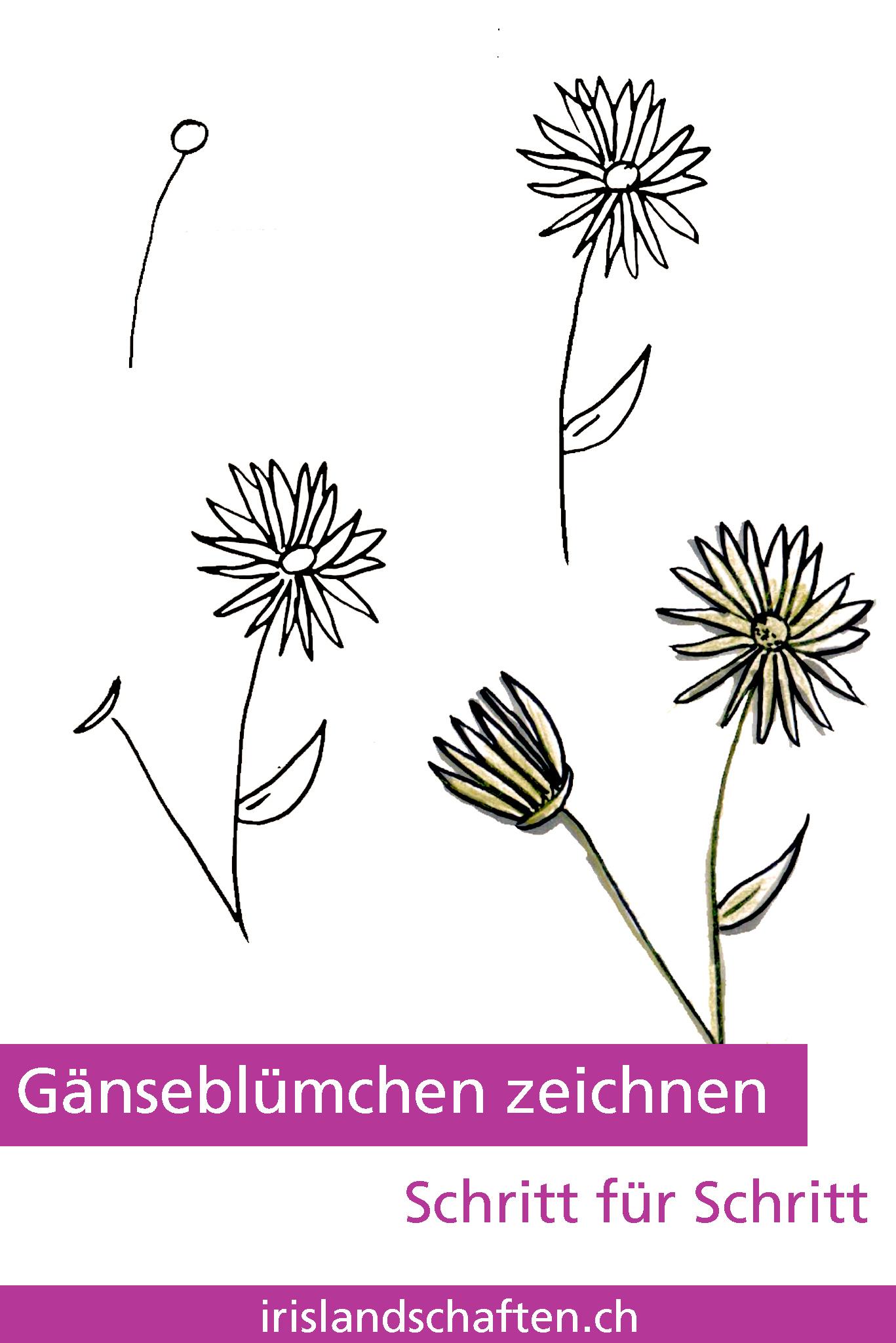 Blumen zeichnen Schritt für Schritt Gartengestaltung