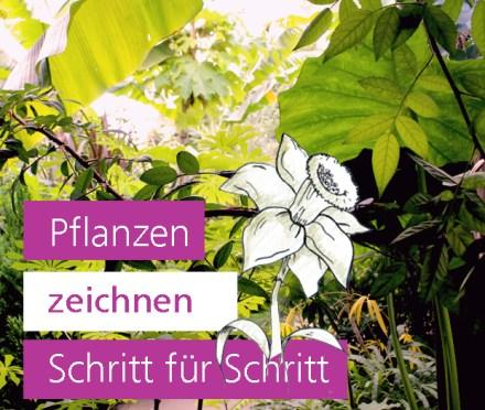 Pflanzen zeichnen Schritt für Schritt Gartengestaltung