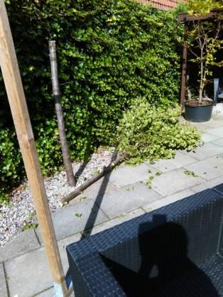 Perenbomen rooien 16-08-2016 (2) (Small)
