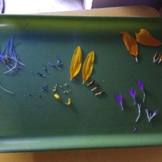 פרחים לשוניים ופרחים צינוריים. משמאל לימין- ארטישוק, עולש, חמנית, חרצית, דרדר
