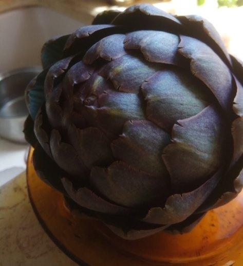 פרי גדול של ארטישוק