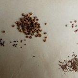 זרעי ירקות שונים- גזר צנון, סלק רוקט