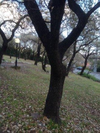 עצי אלון בגינה ציבורית, עברו הגבהת נוף