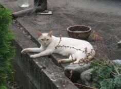 Cat in Ota
