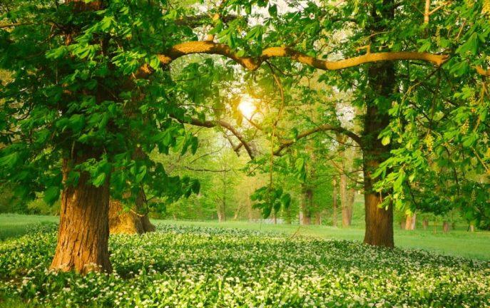 Irlandia posadzi 440 milionów drzew