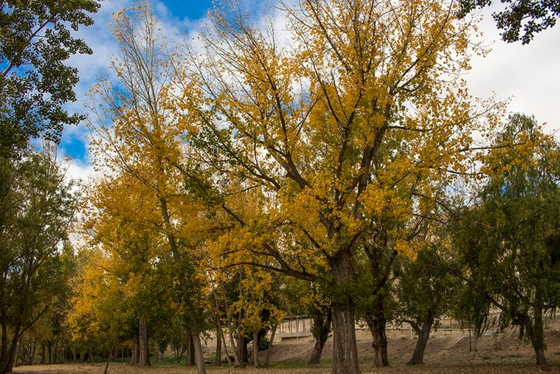 3 Weeks of Solo Travel in Spain: 3 days in Salamanca | Autumn in Salamanca