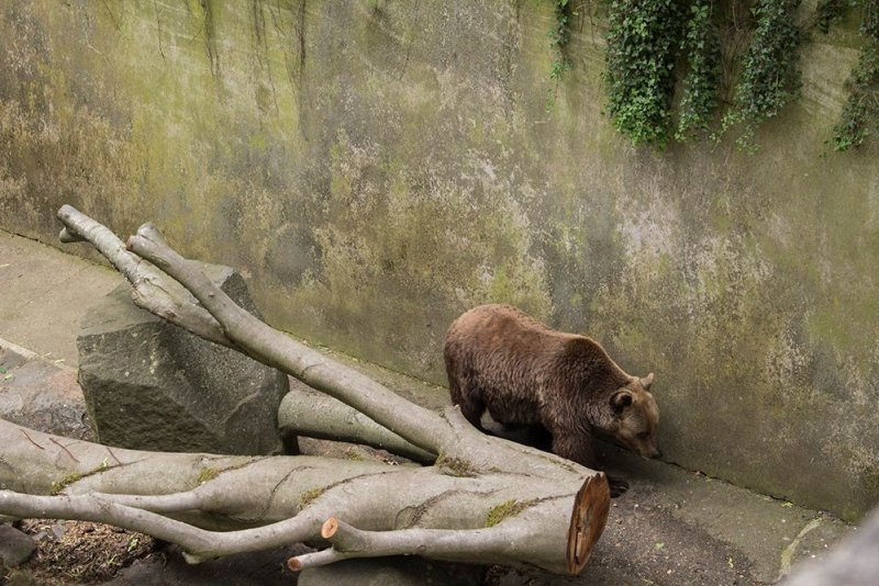 A day trip from Prague to Cesky Krumlov Castle | Bear in the moat of Cesky Krumlov Castle