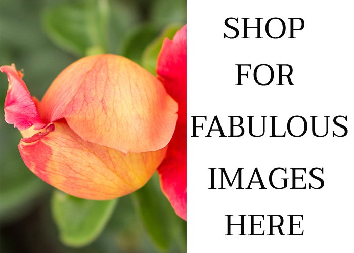 Flower images for sale