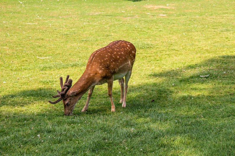 Czech Republic: Visiting Kromeriz Castle and Gardens from Brno   Deer in the chateau gardens