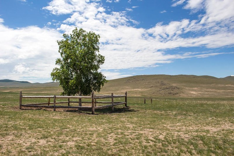 The lonely birch tree in Olkhon