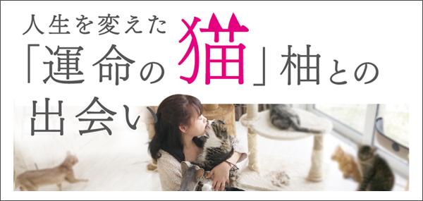 柚子の家 秋田 猫カフェ