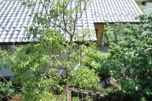 自然素材の家づくり森の診療所-15