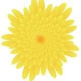 Illustratorのアピアランスで菊の花をつくる -和素材作り-