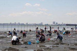 関西でおすすめの潮干狩り場所5選と持ち物・服装の必須アイテム