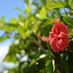 沖縄 花粉症