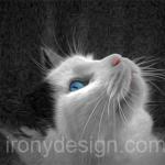 Blue Eyed Cat Photo Paint